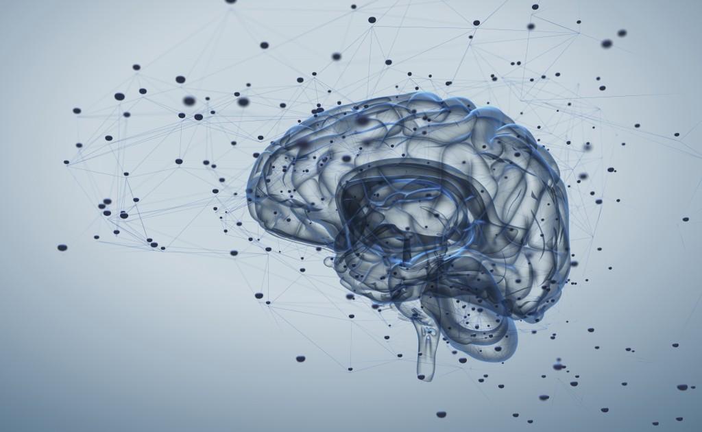 脳機能のネットワーク